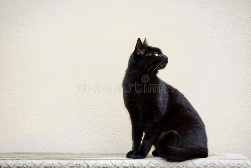 Black Cat On Ornate Bench stock image