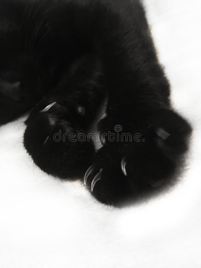 Black cat paw with sharp claws on a white background royalty free stock photo