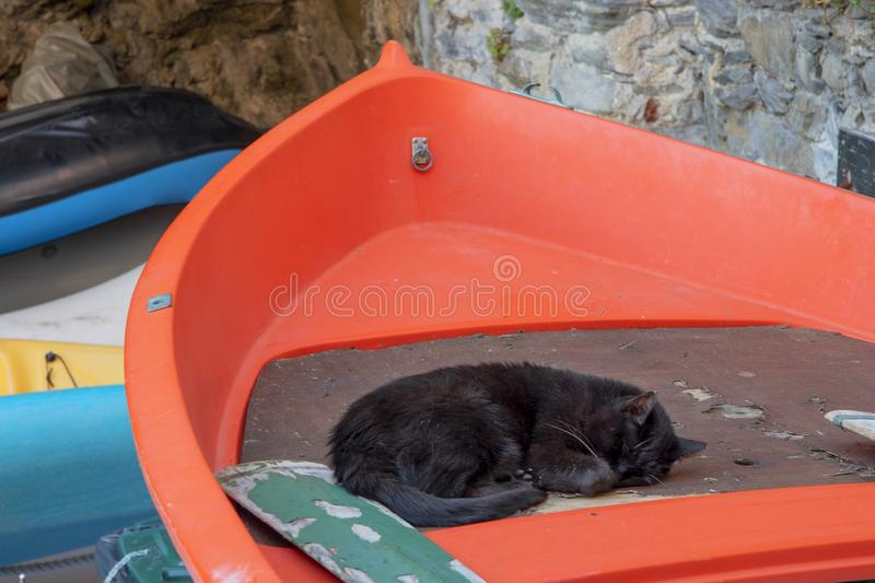 Black cat sleeping in a red boat royalty free stock photography