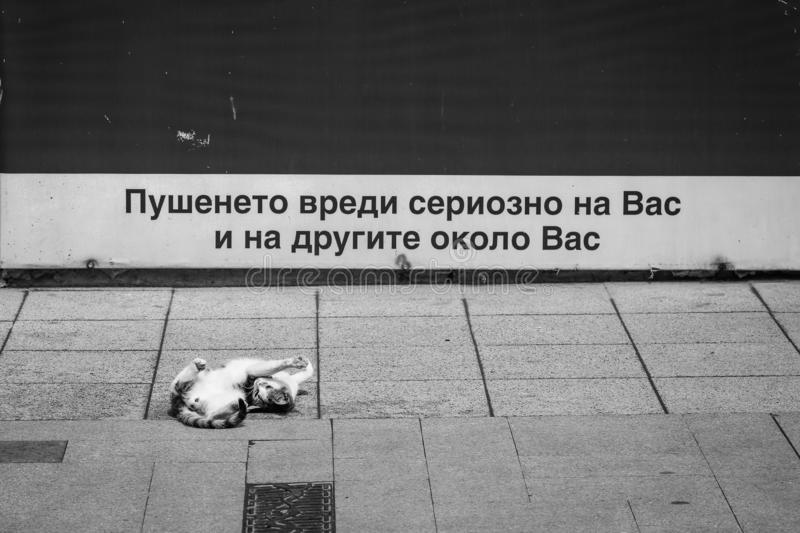 Black and white street photography from Bulgaria on a black cat and an inscription saying `Smoking is seriously damaging you and t stock image