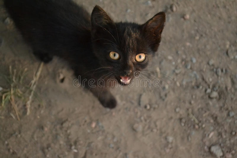 Black cat. The picture shows a cat who asks to eat royalty free stock photo