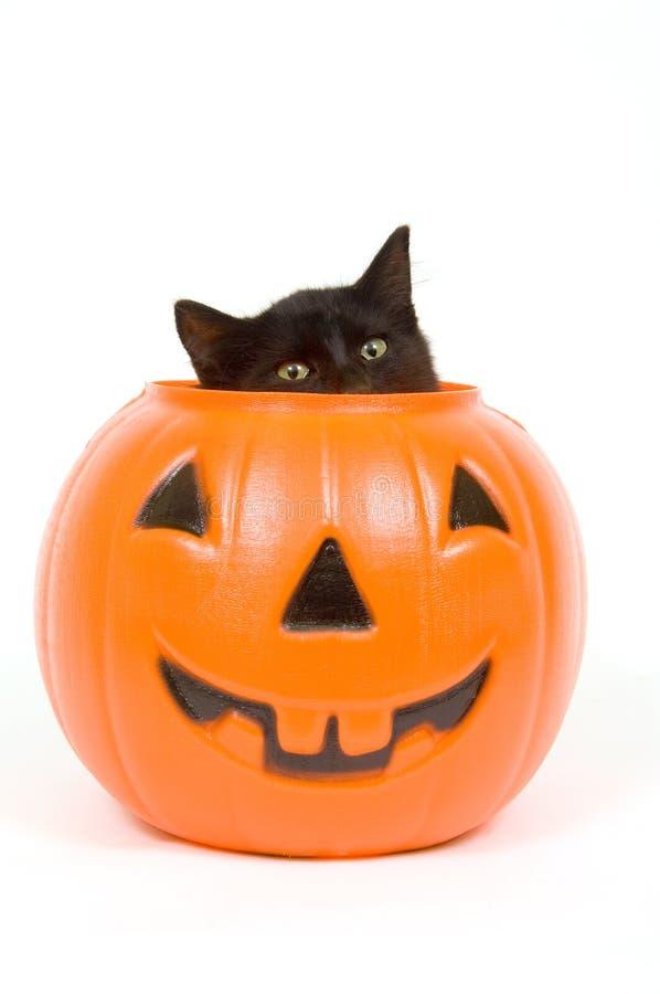 Black cat and plastic pumpkin - halloween stock photos
