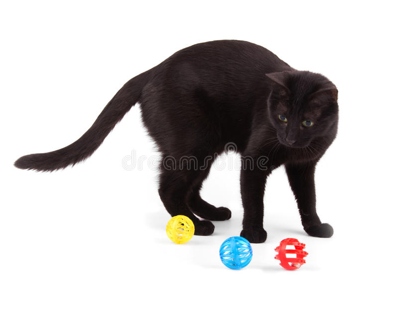 Black cat playing with colorful cat toys stock images