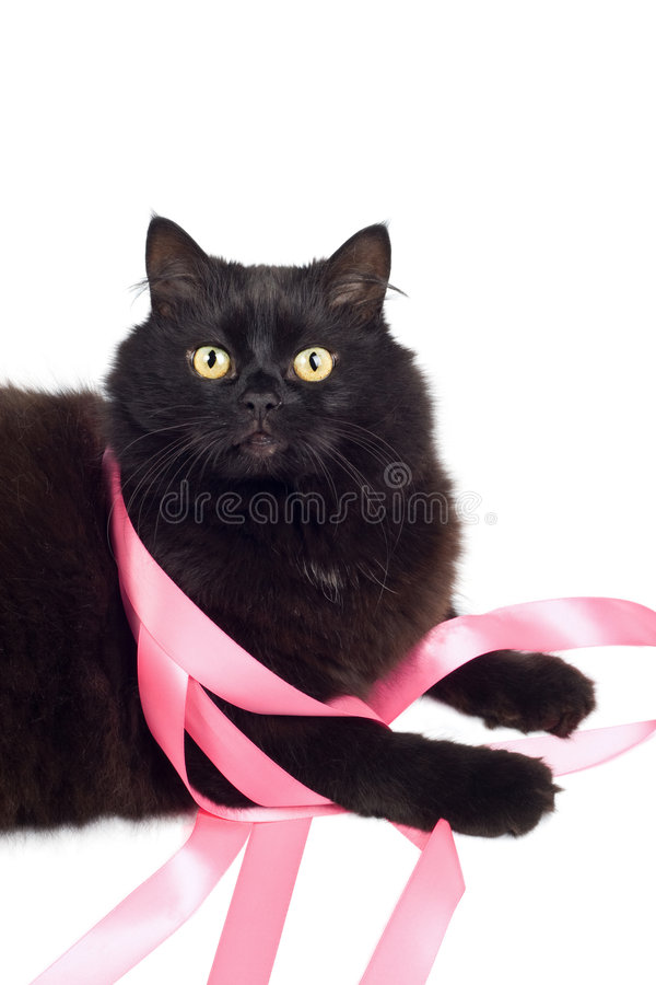 Black cat playing with pink ribbon stock photography