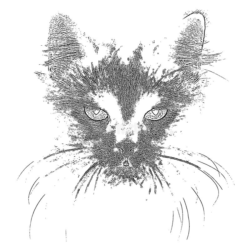 Black Cat. Portrait. EPS10. This is editable vector illustration stock illustration