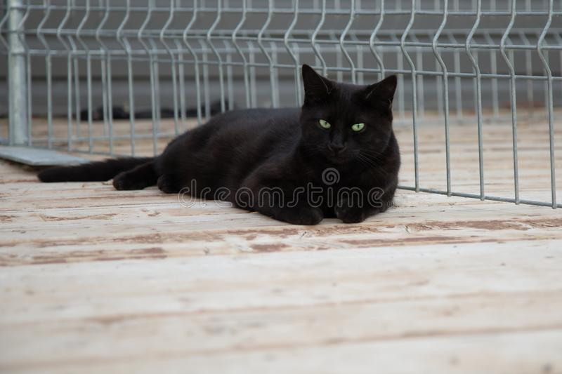Black Cat Portrait Outdoors in the Summer royalty free stock photography