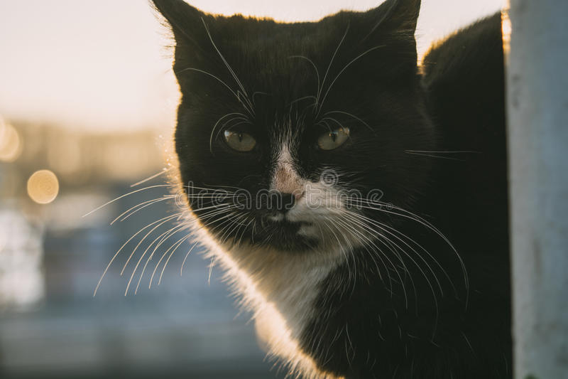 Black cat stock photography