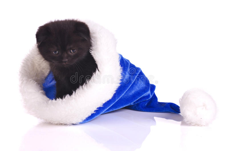 Black cat is the present at christmas royalty free stock photos
