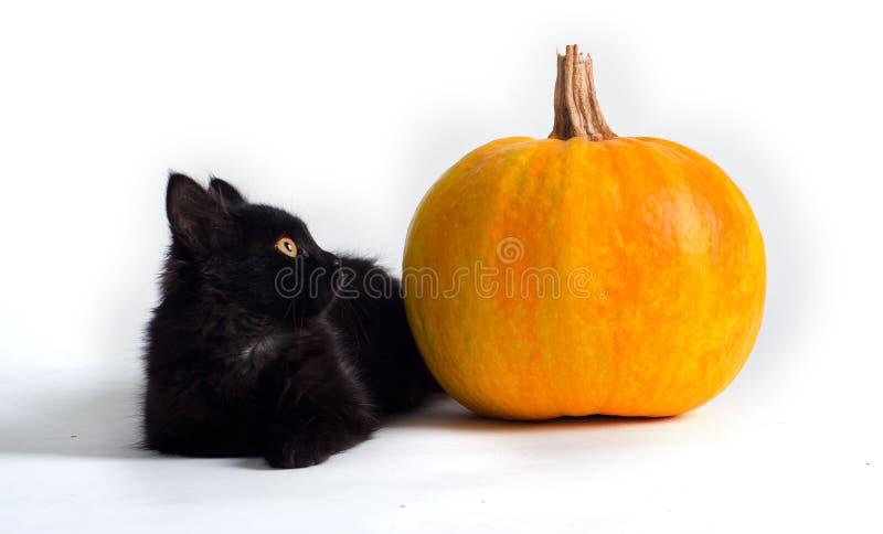 Download Black cat and pumpkin stock image. Image of tiny, animal - 21573793
