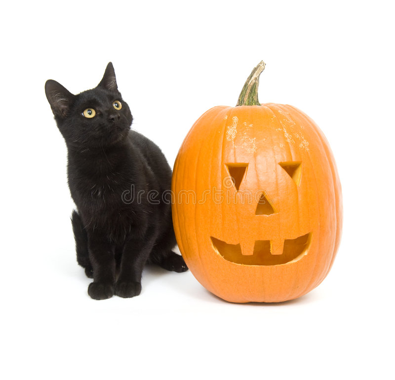 Black cat and pumpkin stock images