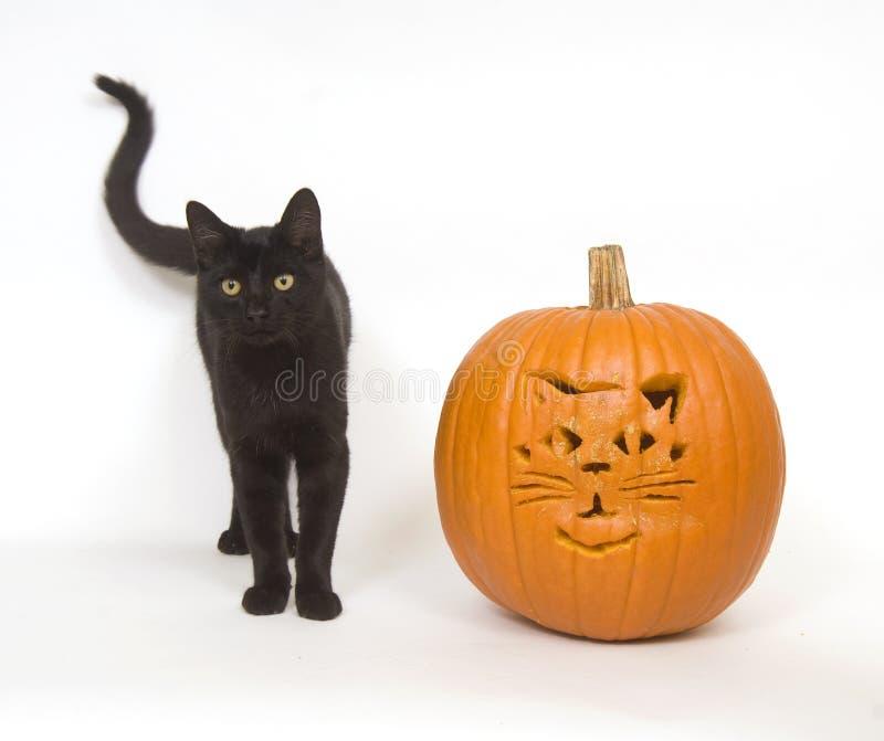 Download Black Cat And Pumpkin Royalty Free Stock Image - Image: 3394106