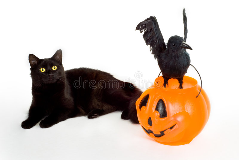 Black Cat, Raven and Candy Pumpkin. royalty free stock images