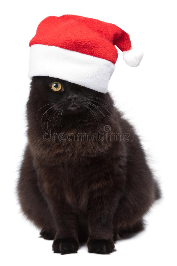 Black cat in red cap isolated