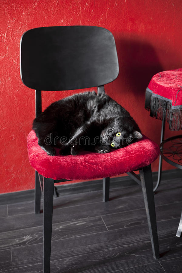 Download Black cat on a red chair stock image. Image of floor - 24270705