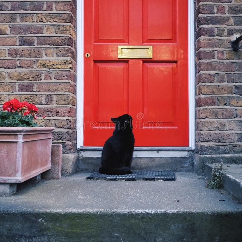 Black Cat And Red Door. A black cat looking at the red door and wondering how to get in stock photography