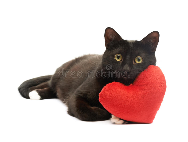 Black cat and red heart royalty free stock photo