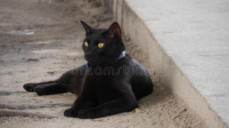Black cat relaxing on walking stock images