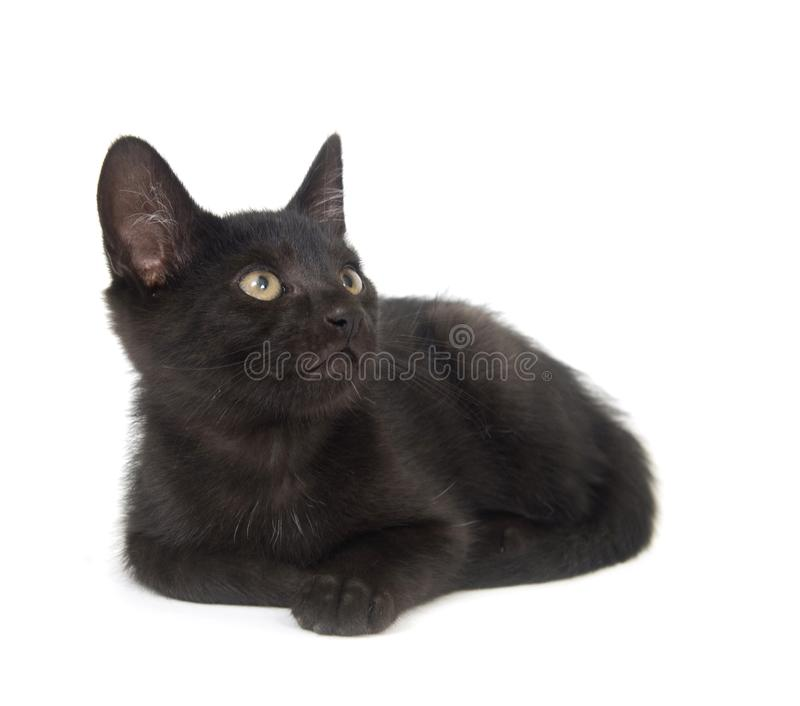 Black cat resting royalty free stock photos