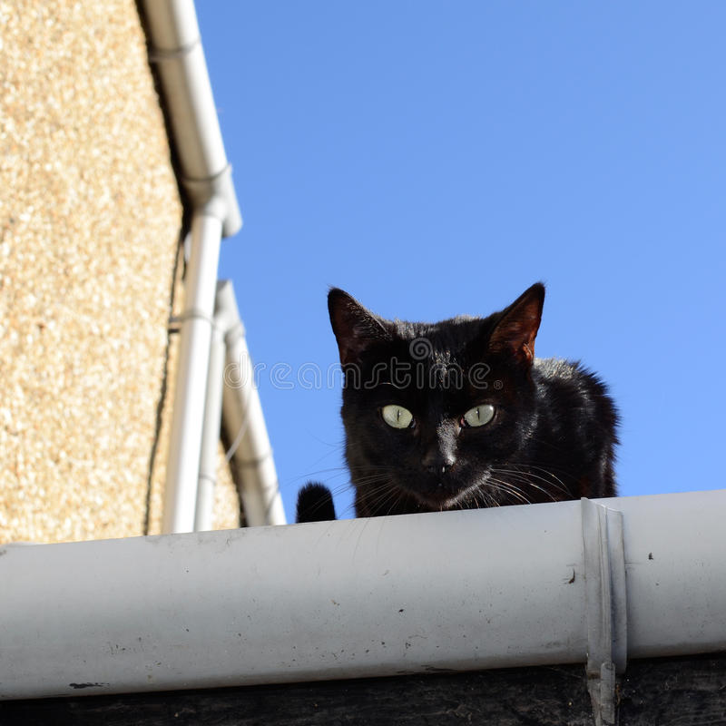 Black cat on the roof royalty free stock photography