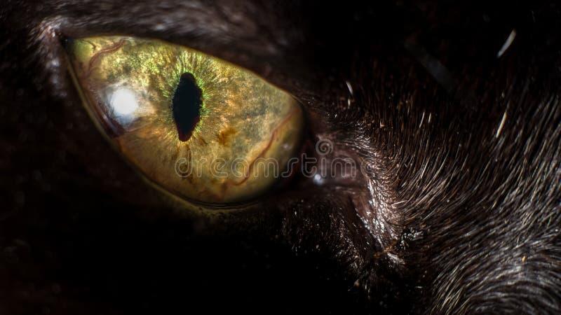 Black Cat's Eye stock photos