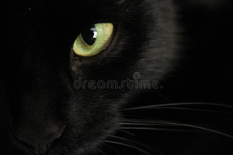 Black cat`s yellow eye royalty free stock images