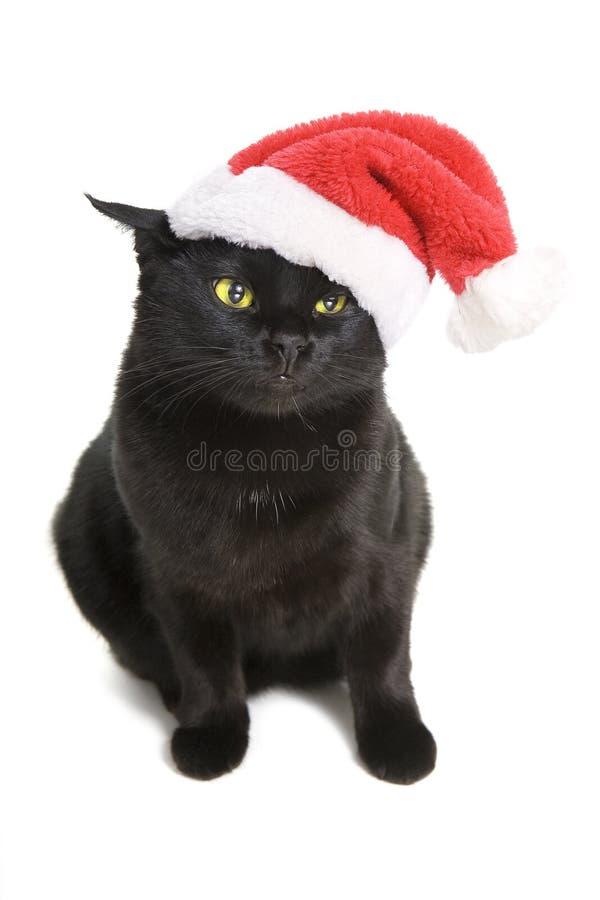 Black Cat Santa - christmas cat royalty free stock image