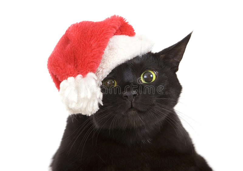 Black Cat Santa - cute christmas cat, Christmas pet with Santa C royalty free stock photos
