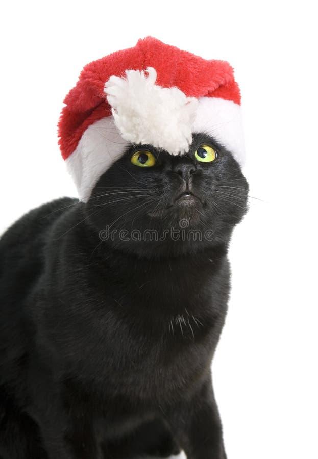 Black Cat Santa - cute christmas cat on white background stock photos