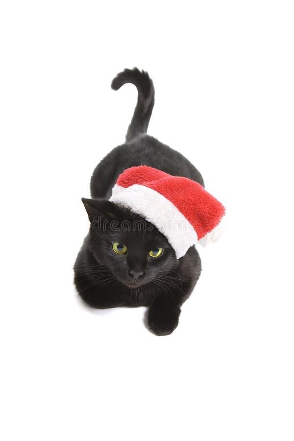 Black Cat Santa royalty free stock photography
