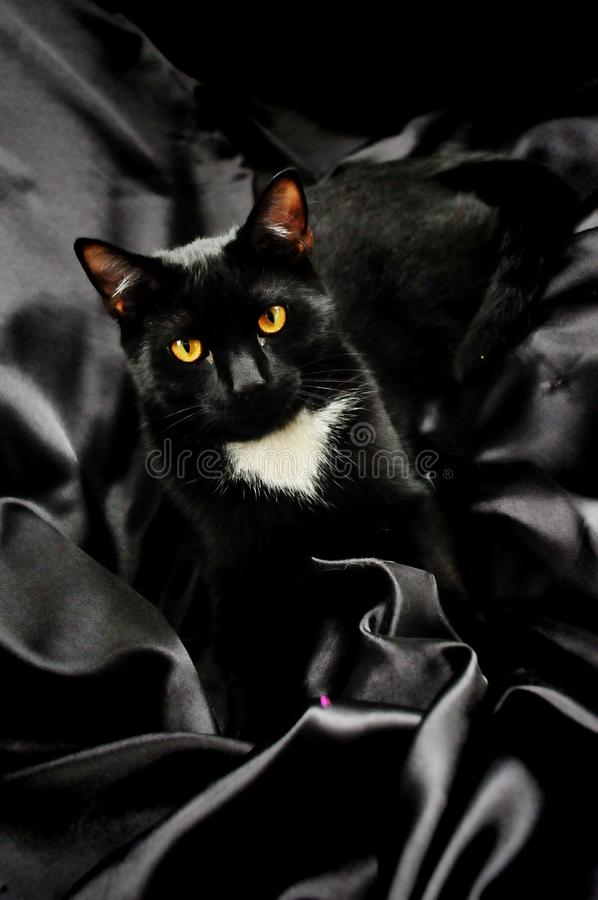 Black Cat on Satin stock photography