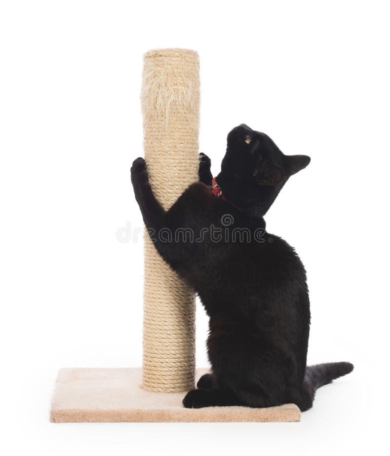 Black cat with a scratching post royalty free stock images