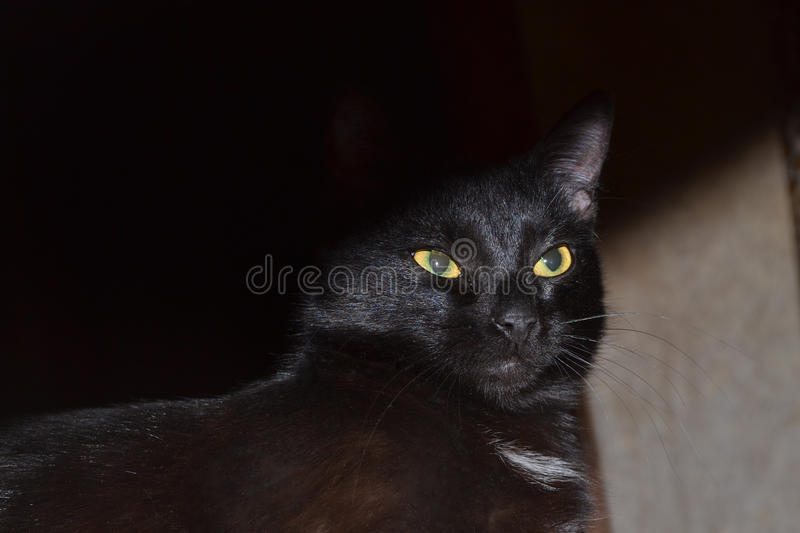 Black cat in the shadows stock photography