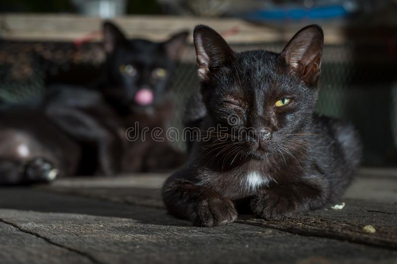 black cat is sick lying on the wooden royalty free stock photo
