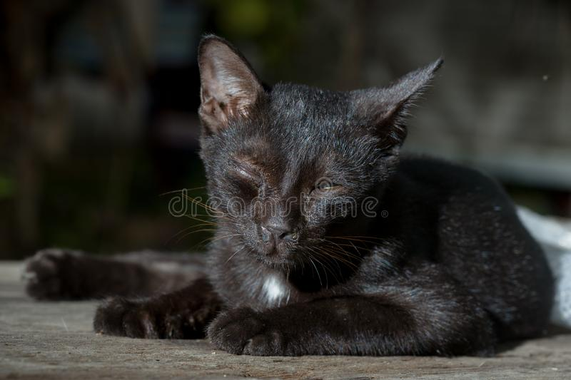 Black cat is sick lying on the wooden royalty free stock image