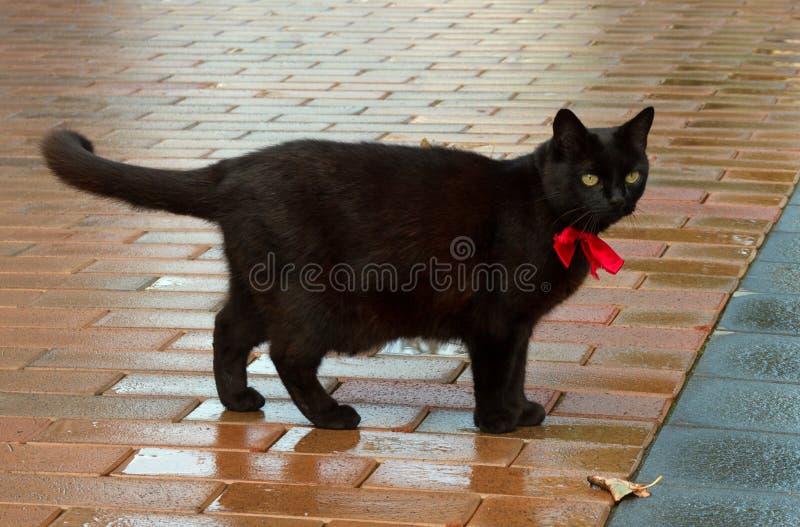 Black cat on sidewalk. royalty free stock images