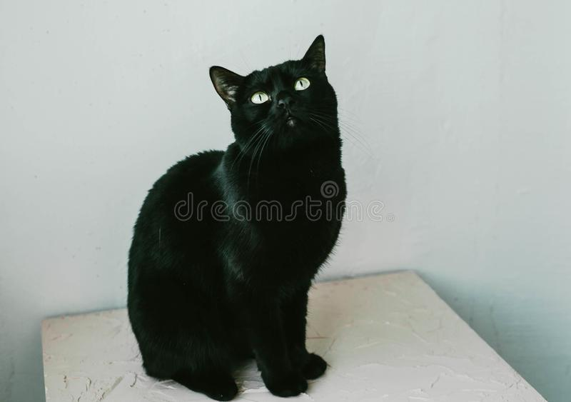 Black cat sits and looks up, on a white background. Animal, sitting, feline, crossbreed, mammal, pet, alone, creature, mixed-breed, vertebrate, yellow, cut royalty free stock images