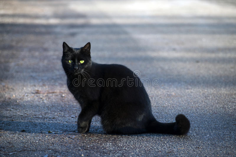 Black cat sits on the street and looks with her green-yellow eye. S to the camera, copy space stock images
