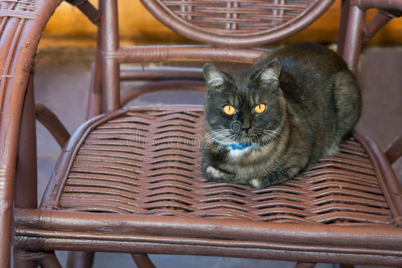 Black cat sits in a wicker rockin chair. Black cat sits in a wicker rocking chair stock photo