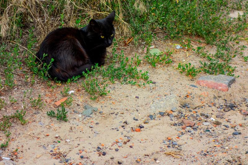 Black cat is sitting on a ground in green grass near a road. Domestic pet or homeless animal to care stock images