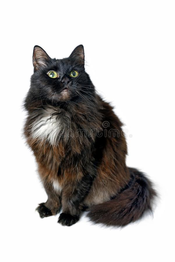 Free Black Cat Sitting Isolated On White Background Royalty Free Stock Photos - 104460408