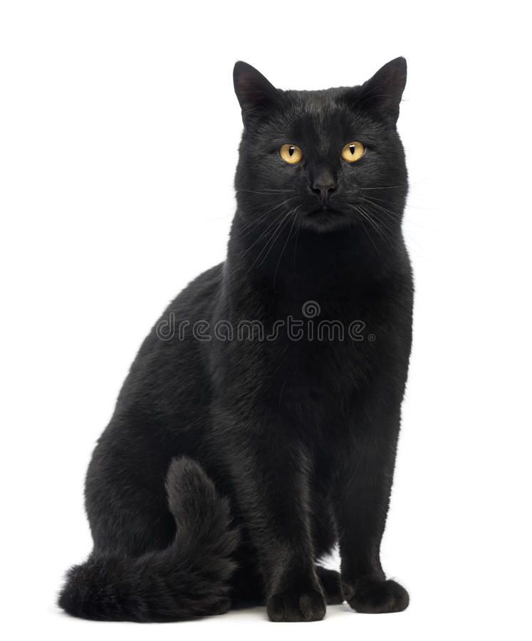 Download Black Cat Sitting And Looking At The Camera Royalty Free Stock Photography - Image: 30338527