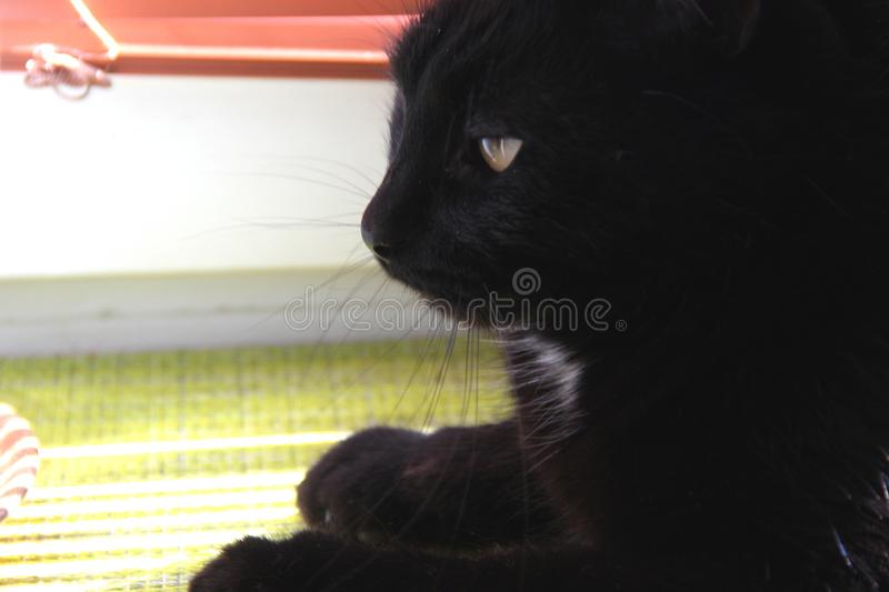 Black cat sitting on the window. And basking in the bright sunlight stock image