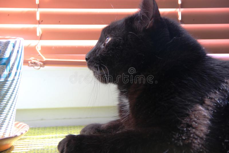 Black cat sitting on the window. Cat black color lies on the windowsill. And basking in the sun royalty free stock images