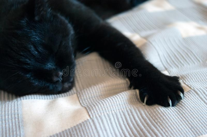 Black Cat Sleeping on a Plaid Blanket, One Paw with Claws Out.  stock images