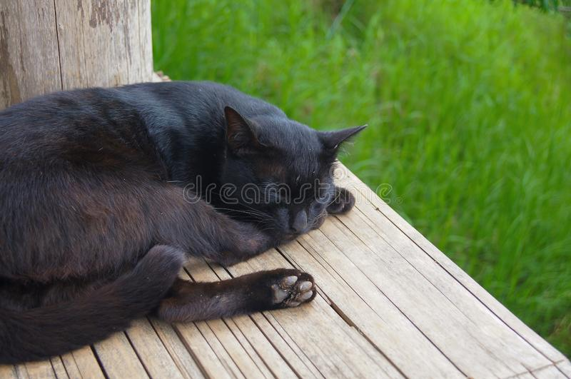 The black cat slept on the yellow wooden litter. There is a  green grass background.  royalty free stock images