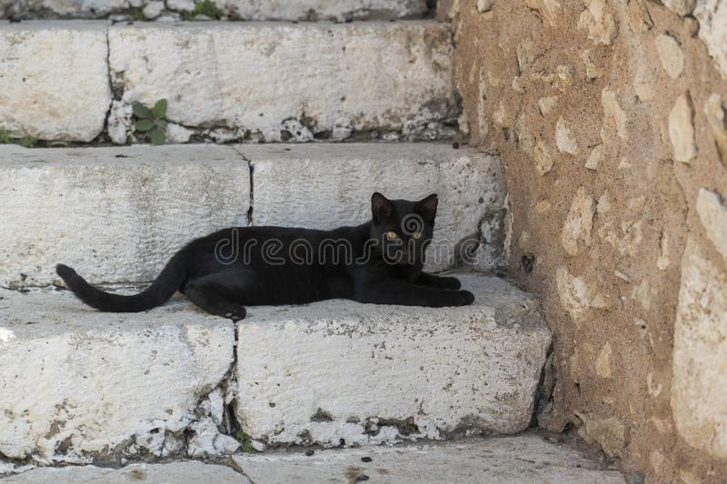 Black cat on stairs royalty free stock images