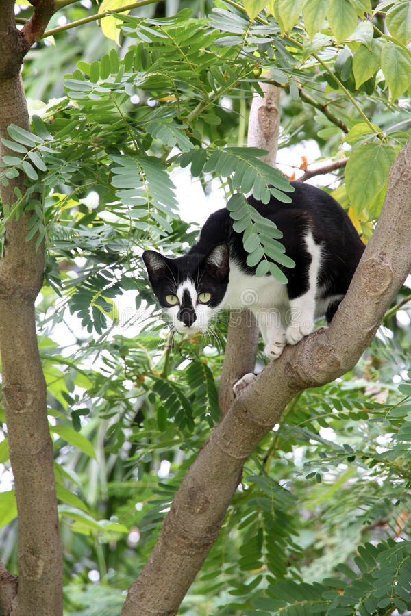 Black cat on the tree in garden. stock photography