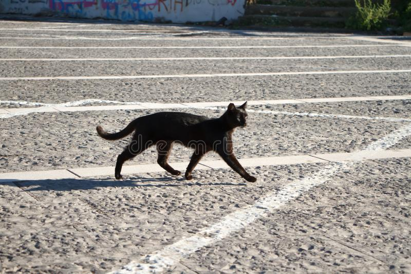 A black cat walks through a stone square with markings on a sunny day stock photography