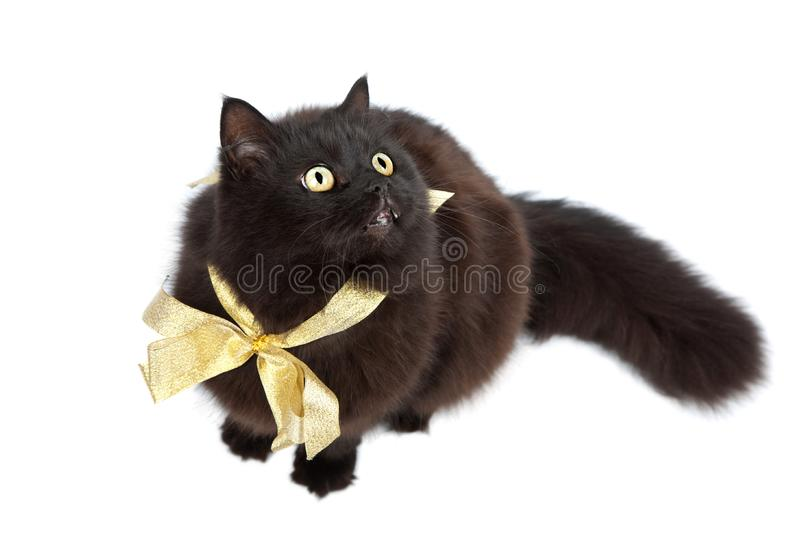 Download Black Cat Wearing Golden Bow Isolated Stock Image - Image of feline, hairy: 10312021