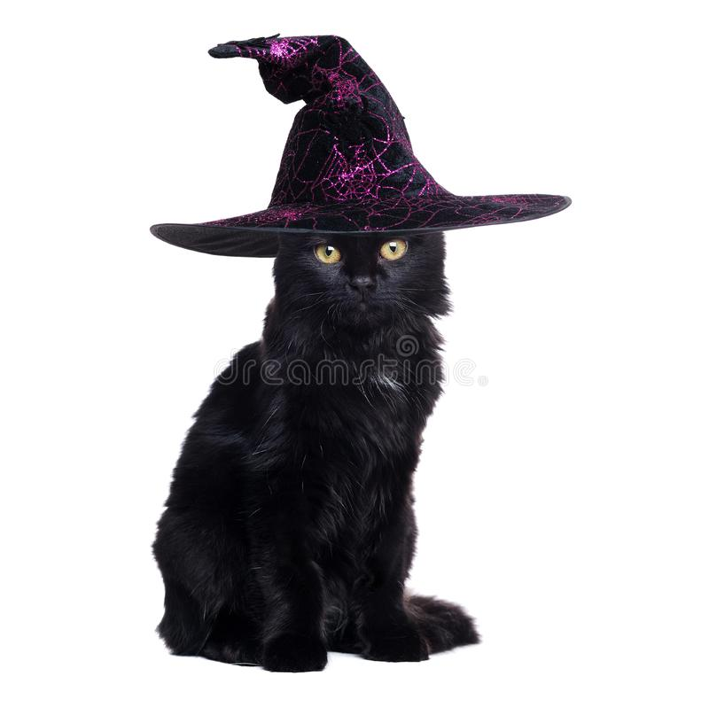 Black cat wearing witch halloween hat royalty free stock images